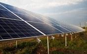 国家电投清洁能源装机占比突破50% 为五大电力集团中首家