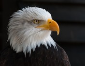 美联储会不会丧失独立性?