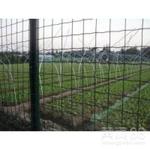 波浪式30米长卷装绿色果园荷兰网护栏批发工厂