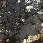回收锂电池正负极废料18825266655